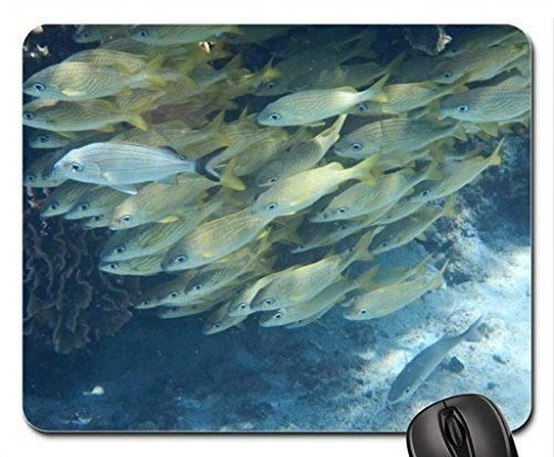 Natur und Landschaft, Gaming Mouse Pad, Korallen, Fische - Mousepad, Maus - Pads (Marine - Mousepad)