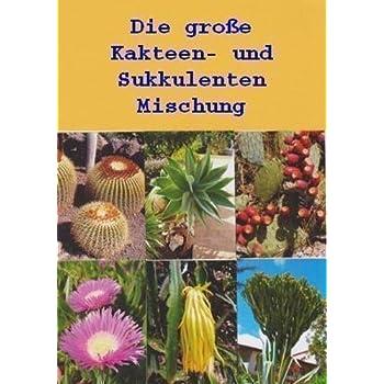 Großer Wiesenknopf *Sanguisorba Officinalis* ca 150 Samen