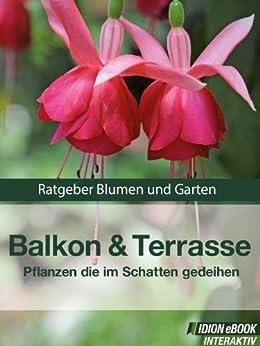 Balkon & Terrasse - Pflanzen Die Im Schatten Gedeihen - Ratgeber ... Blumen Fur Balkon Im Schatten Pflanzen