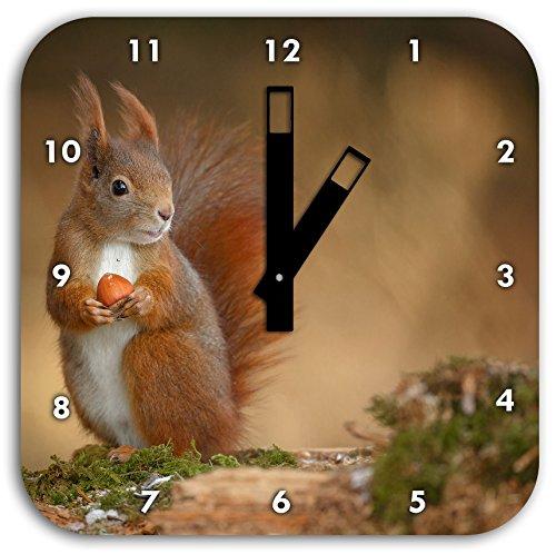 Freches Eichhörnchen mit Nuss, Wanduhr Quadratisch Durchmesser 28cm mit schwarzen eckigen Zeigern und Ziffernblatt, Dekoartikel, Designuhr, Aluverbund sehr schön für Wohnzimmer, Kinderzimmer, Arbeitszimmer