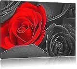 romantische rote Rosen schwarz/weiß Deluxe Format: 120x80 cm auf Leinwand, XXL riesige Bilder fertig gerahmt mit Keilrahmen, Kunstdruck auf Wandbild mit Rahmen, günstiger als Gemälde oder Ölbild, kein Poster oder Plakat