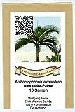 Archontophoenix alexandrae - Alexandrapalme - 10 Samen