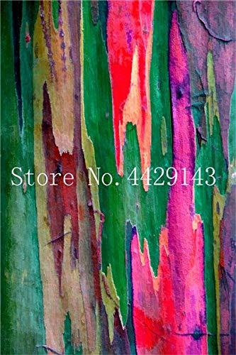 Shopmeeko Graines: 2018 Vente Hawaï arc-en-Eucalyptus, 50 Pcs 100% Véritable arbre d'ornement exotiques croissance Bonsai naturelles Accueil Ornements de jardin: 10