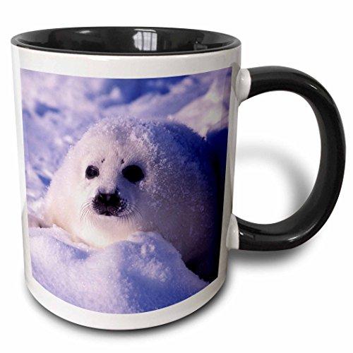 3dRose Golf von St. Lawrence, Sattelrobbe pup-cn14gje0025-gavriel jecan-Two Ton Schwarz Tasse, Keramik, Mehrfarbig, 10,2x 7,62x 9,52cm -