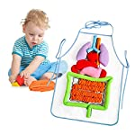 Blue-Yan 3D Anatomy Apron - Human Body Apron - Puzzle Illumination Apron for Children - Educational Material for Pre-School Education