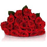 20 Rote Rosen mit XXL-Blütenköpfen   VERSANDKOSTENFREI   Entworfen von der Europameisterin   Gratis-Grußkarte & Geschenkverpackung