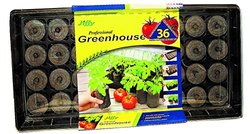 jiffy-5089-tomate-invernadero-36-plantas-morakniv-estenopenica