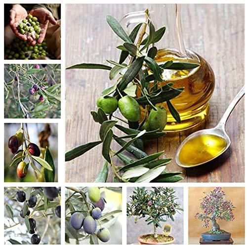 AGROBITS Beförderung! 15 PC Rare Olive Bonsai-Baum (Olea europaea) Mini-Baum Anlage für Hausgarten-Zubehör, exotische Blumentöpfe Pflanz: gemischt