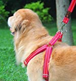 Aibaopet Hundegeschirr mit Leine (S)