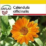 SAFLAX - Set de cultivo - Botón de oro - 50 semillas - Calendula officinalis