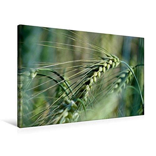 Premium Tessile della tela 45cm x 30cm Croce cereali, 75x50 cm di k.A. Flori0
