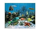 deinebilder24 Leinwand-Bilder XXL - 70 x 90 cm - Korallen mit Seesternen und Fischen Karibisches Meer