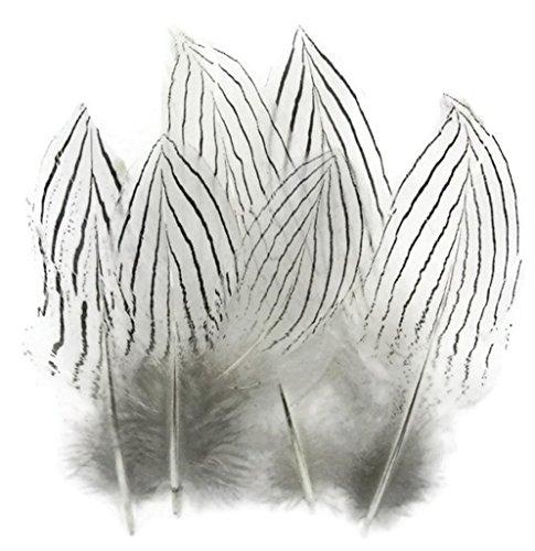 Bild Einem Huhn Von Kostüm - ERGEOB Natürliche Silberhühnerfedern Corsage Feather 5-8cm