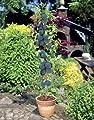 Säulenobst von Patioplant - Du und dein Garten