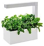 Tregren Herbie blanc 6 plantes, Jardinière et Potager d'intérieur Autonome pour herbes aromatiques, petits légumes, fleurs - Kit prêt à pousser avec arrosage automatique - Blanc