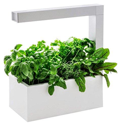 Tregren Herbie blanc 6 plantes, Jardinière et Potager d'intérieur...