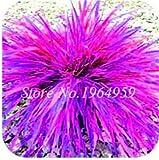 Pinkdose 100 Teile/beutel Bunte Schwingel Gras Bonsai Indoor Garten Festuca Mehrjährige Winterharte Zierpflanzen Einfach Wachsen Bonsai Sementes: 12