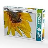 Ein Motiv aus dem Kalender Was da kriecht und fleucht - Heimische Insekten - ganz nah dran 1000 Teile Puzzle hoch (CALVENDO Natur)