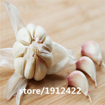 La Stérilisation de semences végétales, l'ail, semences de puerro, autour de 100 particules