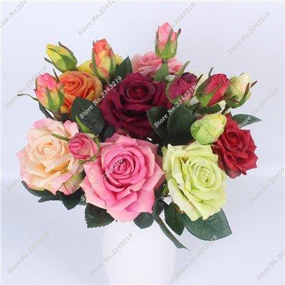 Exotique Miniature Bonsai Fleur Rose Rosas Graine Bricolage jardin et maison embellissant de purification d'air 110 Pcs/Sac 23