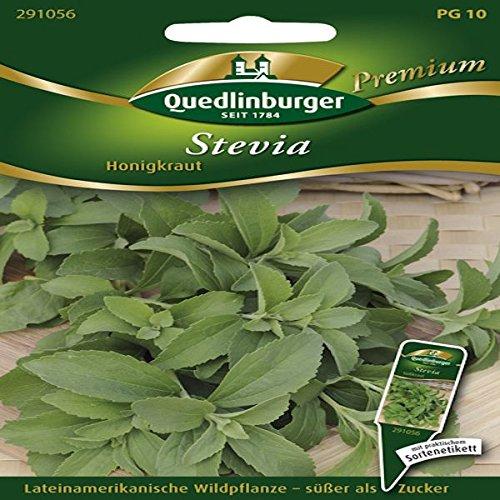 Stevia Süßkraut - Stevia rebaudiana QLB Premium Saatgut Sonstige Kräuter