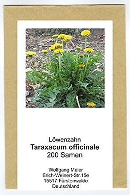 Löwenzahn - Taraxacum officinale - Salat- u. Heilpflanze - Sorte Nouvelle - 200 Samen von exotic-samen - Du und dein Garten