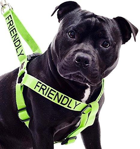 hundeinfo24.de Freundlich Grün Farbe Coded Nylon L-XL Non-Pull-Hundegeschirr (bekannt als Freundlich) die Unfallgefahr Durch Warnung Sonstige Ihren Hund im Voraus