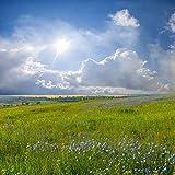 azutura Blaue Blumen Fototapete Grüne Wiese Tapete Wohnzimmer Schlafzimmer Dekor Erhältlich in 8 Größen Klein Digital