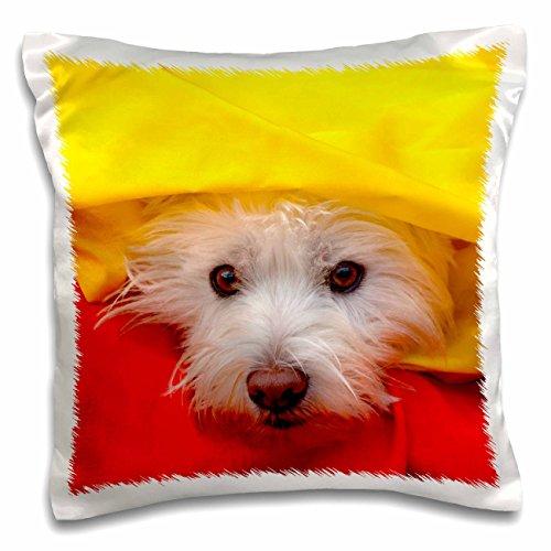 3dRose West Highland Weiß Terrier Peeking aus Gelb, Mr. und PR, pillow Fall, 16von 40,6cm (PC 209744_ 1) (Decke West Highland)