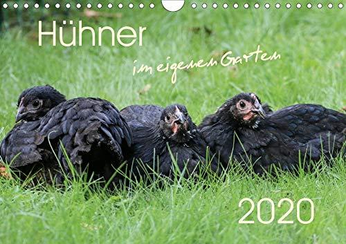 Hühner im eigenen Garten (Wandkalender 2020 DIN A4 quer): Hübsche und hochwertige Aufnahmen von glücklichen Hühnern, die im eigenen Garten leben (Monatskalender, 14 Seiten ) (CALVENDO Tiere) -
