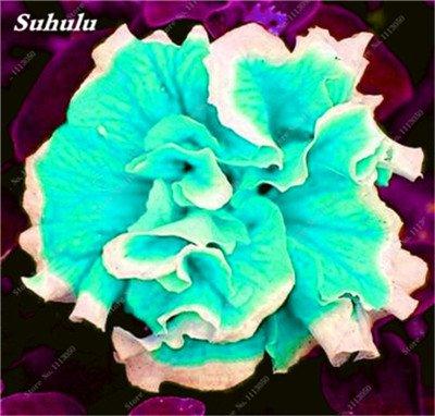 100 pcs / sac pétales de double Petunia Graines Bonsai Graines de fleurs Court Taille Jardin Fleurs Graines Pot intérieur ou Ourdoor usine 14