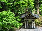 Japanische Zeder Bonsai geeignet 10 Samen