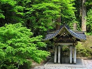 japanische zeder bonsai geeignet 10 samen garten. Black Bedroom Furniture Sets. Home Design Ideas
