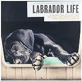 Magnet & Stahl 23.042,9cm Labrador Leben'2019Kalender