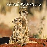 Erdmännchen 2018: Broschürenkalender mit Ferienterminen. Lustige Bilder der witzigen kleinen Tiere. 30 x 30 cm