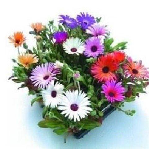 Creative Farmer Burf Flower Seeds Pot Home Garden Vertical Pots- Garden Flower Seeds  available at amazon for Rs.99