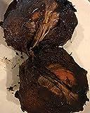 Nuevas y sanas Negro zapote - Diospyros Nigra - Pudín de Chocolate Planta de semillero de árboles frutales Tropic