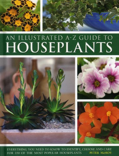 an-illustrated-a-z-guide-to-houseplants-everything-you-need-to-know-to-identify-choose-and-care-for-