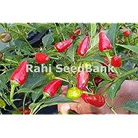 Portal Cool Mini jalapeño chile rojo - un medio caliente, hermoso y único de chile Variedad