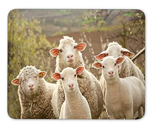 Schafe und Lämmer auf der Weide Mausunterlage Gaming Mausunterlage Mausunterlage Mausunterlage Die Büromatte Mousepad rutschfeste Gummiunterlage,Gummimatte 11,8