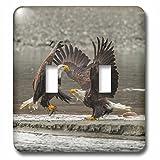 3drose LLC. l.s.p. 229431_ 2b01j6dclks USA, Alaska, Chilkat-wertvolle. Bald Eagles Fighting.–Doppel-Wechselschalter, mehrfarbig