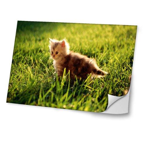 """Katzen 10015, Junge Katze, Skin-Aufkleber Folie Sticker Laptop Vinyl Designfolie Decal mit Ledernachbildung Laminat und Farbig Design für Laptop 14"""""""