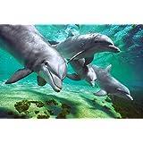 1art1 48977 Delfine - Unter Wasser Poster (91 x 61 cm)