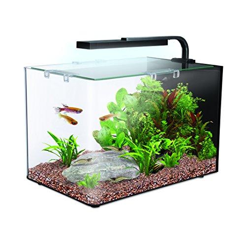 Tropical fish tanks for Amazon fish tank