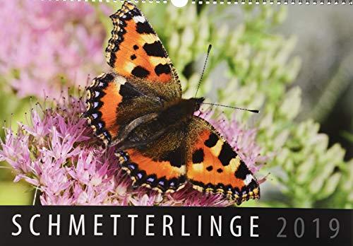 Schmetterlinge 2019: Wandkalender