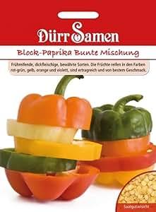 Paprikasamen - Block-Paprika Bunte Mischung von Dürr-Samen
