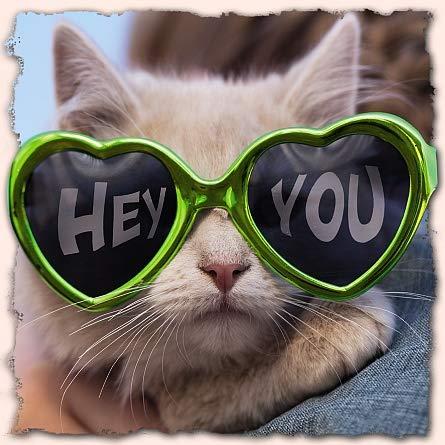 Me to You Up Close 3D-Geburtstagskarte mit Katze in Sonnenbrille