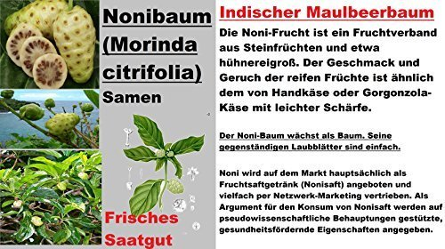 5x-noni-arbol-semillas-delicioso-fruta-morinda-citrifolia-jardin-planta-raro-253