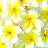 frangipani profumo corpo spray mist Triple profumata super Strong 125ml/113,4gram immagine