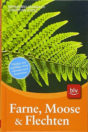 Farne, Moose & Flechten